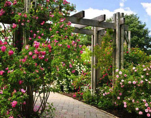 Super Cool Backyard Garden Ideas